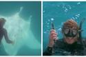 فيديو وصور كادت تموت.. سمكة عملاقة تطلب المساعدة من غواص لإنقاذ حياتها