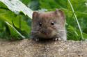 العلاج بالفئران الميتة وبقايا الموتى: أدوية مخيفة جداً لن تتخيل وجودها
