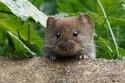 معجون الفأر الميت