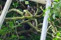 قامت القطة بإصدار أصوات استغاثة لإنقاذها من فوق الشجرة