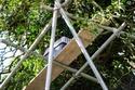 قررت شركة سقالات تشييد مبنى من 4 طوابق حول الشجرة لإنقاذ القطة
