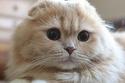 القطة بيل