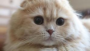 هذه القطة الرقيقة لديها ذيل حيوان آخر شاهد الصور واكتشف بنفسك