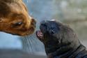 الحب بين الحيوانات