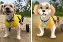 الكلب الصغير كيف تحول
