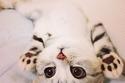 20 صورة رائعة لقطط صغيرة ستذيب قلبك بجمالها ولطافتها