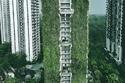 يمكن أن تكون جدران المبنى مفيدة جدًا بهذه الأشجار في سنغافورة