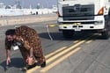 Heaviest vehicle pulled by hair - UAE