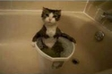 طرق طريفة فعلتها القطط للهروب من حرارة الطقس.. شاهدوا الصور