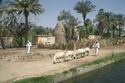صور بين العنصرية وقلة الأدب: تعرفوا على أسماء قرى غريبة في مصر