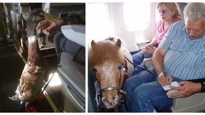 صور لا تصدق أغرب الحيوانات التي سافرت بين الركاب.. هل تجلس بجوار كنغر؟