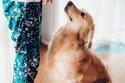 فتاة مع كلبها في جلسة تصوير