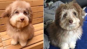 بملامح بشرية وعيون زرقاء.. صور الكلب نوري تثير حيرة الإنترنت