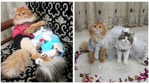 صور: غضب وسخرية.. حفل زفاف رومانسي لقط وقطة في هذه الدولة العربية