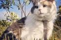 """قطة أيرلندية """"عمياء"""" تحترف تسلق الجبال"""