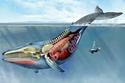 صورة تشريحية لأمعاء الحوت