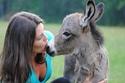 صور حمير رضيعة بريئة ستغير فكرتك عن تلك الحيوانات المظلومة