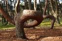 صور: سر الغابة الراقصة أحد أغرب الغابات.. تسلق أشجارها يحقق الأحلام