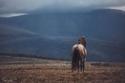 لعشاق الفروسية.. أجمل صور الخيول البرية في جبال أوروبا