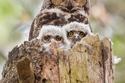 45 صورة تثبت أن البومة هي أجمل طيور العالم وأذكاها