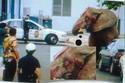 هرب هذا الفيل المسكين بعد مكوثه 20 عاماً في سيرك زيمبابوي كان يتم تعذيبه فيها ولم يتمكنوا من إعادته فأطلقوا عليه 86 رصاصة