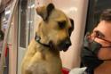الكلب مع أحد ركاب مترو الأنفاق