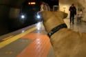 الكلب ينتظر قدوم مترو الأنفاق