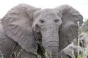 كيف سيصبح شكل هذه الحيوانات إذا كانت عيونها في مقدمة رأسها وليس إلى الجانبين