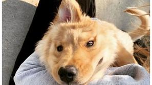 وحيد القرن الذهبي: كلب مذهل لديه أذن واحدة في منتصف رأسه كيف حدث هذا؟