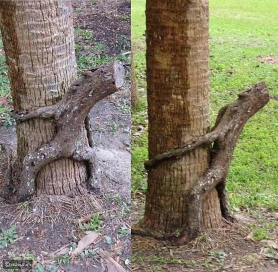 أشجار عادية تتحول لشخصيات مخيفة بهذه الطريقة: شاهد بنفسك