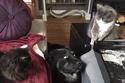 يبدو أن ذلك الكلب كان مذعوراً للغاية بسبب القطتين