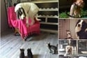 هذا ما يحدث عندما تتواجد الكلاب والقطط في نفس المنزل