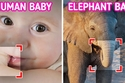 2. صغار الفيلة تشبه صغار البشر.