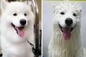 صور مضحكة لكلاب فقدت وقارها تماماً بسبب الاستحمام.. العاشرة قاتلة