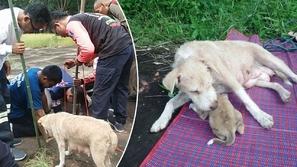 فيديو يذيب القلوب لكلبة تستنجد بالبشر لإنقاذ صغارها من الموت