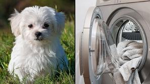 فيديو: مراهقة متهورة تضع كلبها الأليف في مجفف الملابس في مشهد مفجع