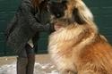 الكلبة سيمبا