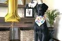 كلب يحتفل بعيد ميلاده