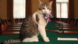 صور: قط بدرجة موظف حكومي لا يمكن الاستغناء عنه في الوزراة البريطانية