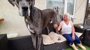 في عيد ميلاده: أطول كلب في العالم يحقق رقم قياسي جديد