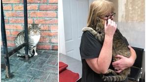 صور: لقاء يذيب القلوب بين امرأة وقطتها التي فقدتها قبل 11 سنة