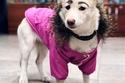 الكلبة بيتي