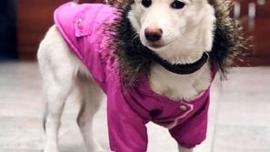 كلبة ضالة تتحول إلى نجمة مشهورة بفضل حاجبيها شاهد الصور