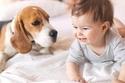 لحظة جميلة بين طفل وكلب