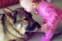 طفل يقبل رأس الكلب