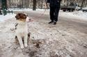 فاحت رائحة القهوة في متنزهات كراكوف المغطاة بالثلوج