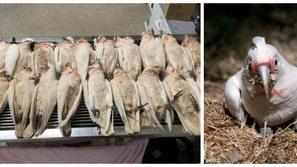صور: عيون من الدماء.. مشهد مرعب لسقوط طيور ميتة من السماء