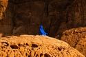 صحراء العلا في السعودية كما لم تراها من قبل: أعمال فنية أضافت لها روح