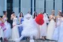 سباق العرائس