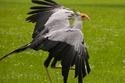 الطائر صاحب أجمل عيون